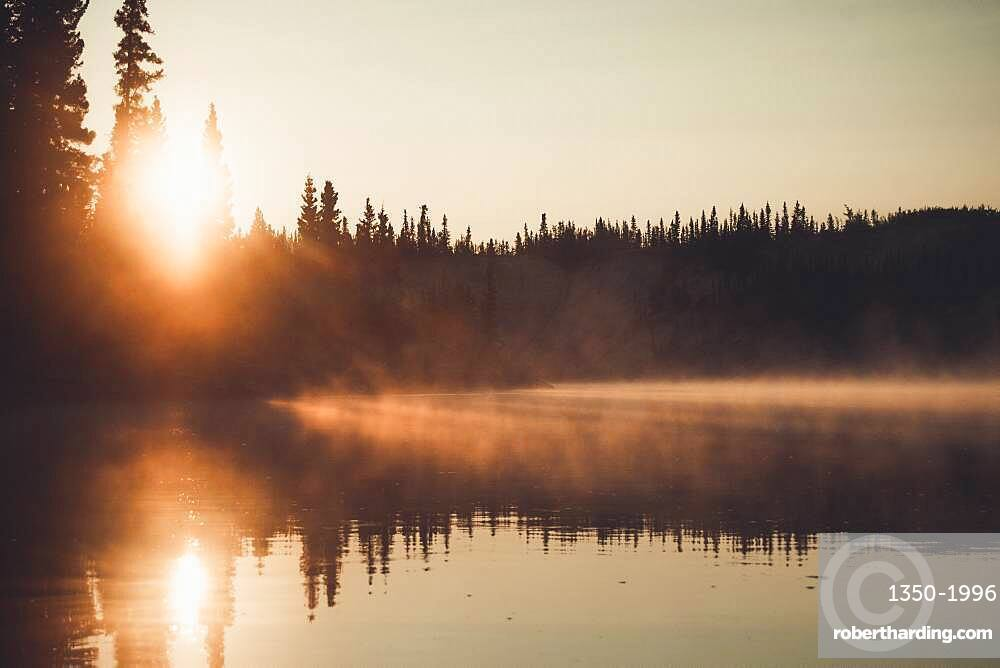 A fine layer of fog shimmers golden in the light of the rising sun. Yukon Territory, Canada