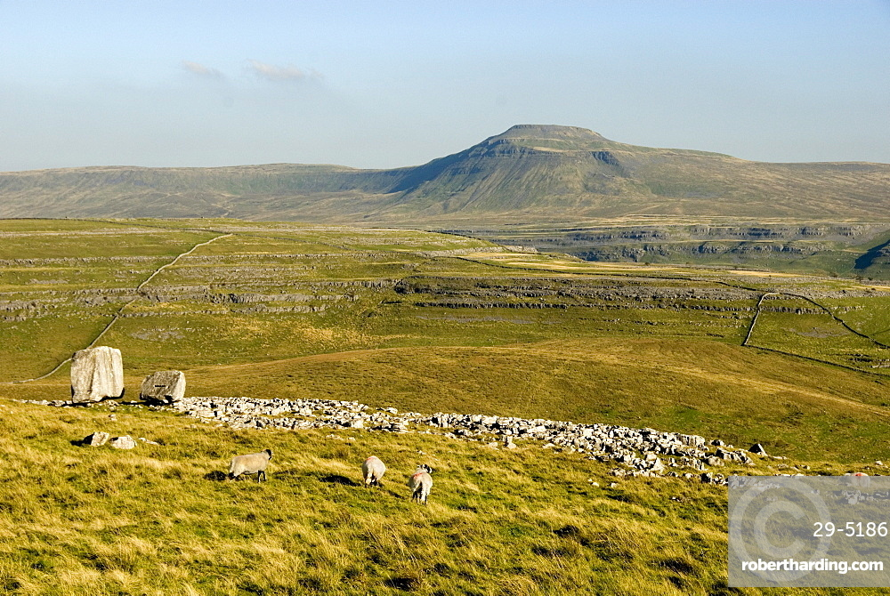 Ingleborough, seen beyond the Cheese Press Stone above Kingsdale, Yorkshire Dales, Yorkshire, England, United Kingdom, Europe