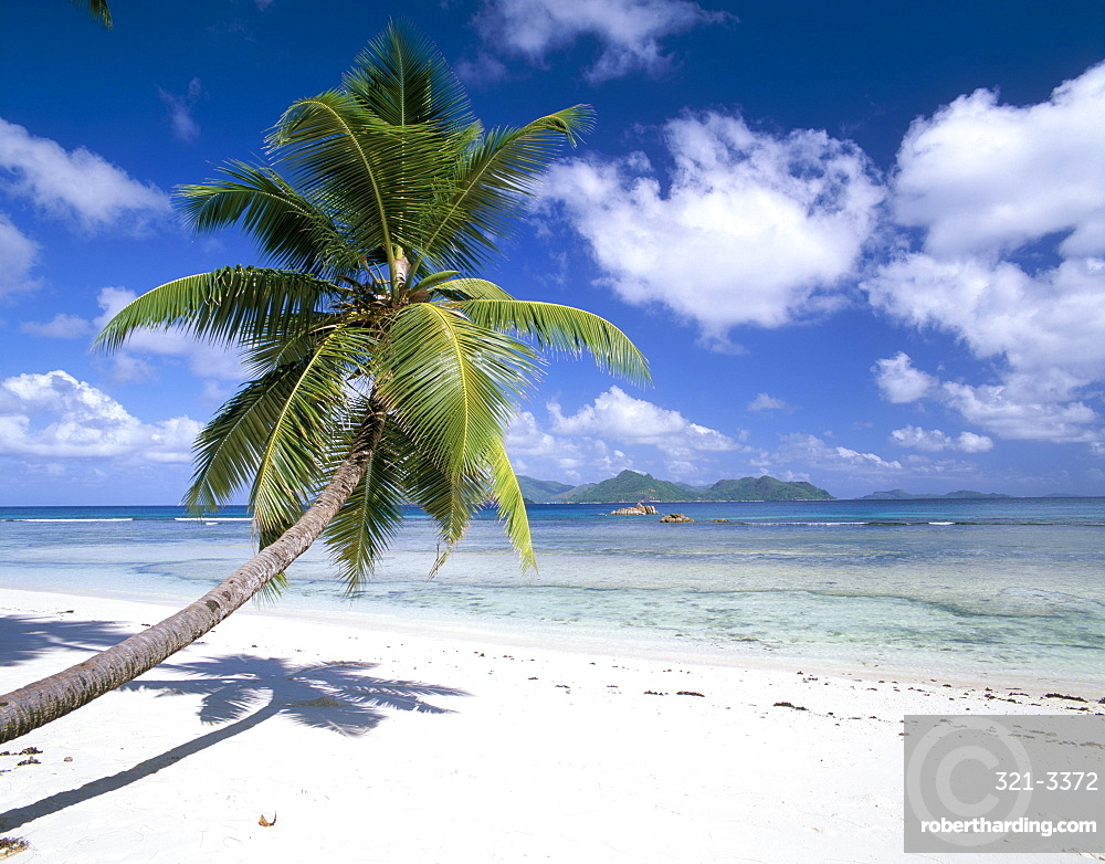 Leaning palm tree and beach, Anse Severe, island of La Digue, Seychelles, Indian Ocean, Africa