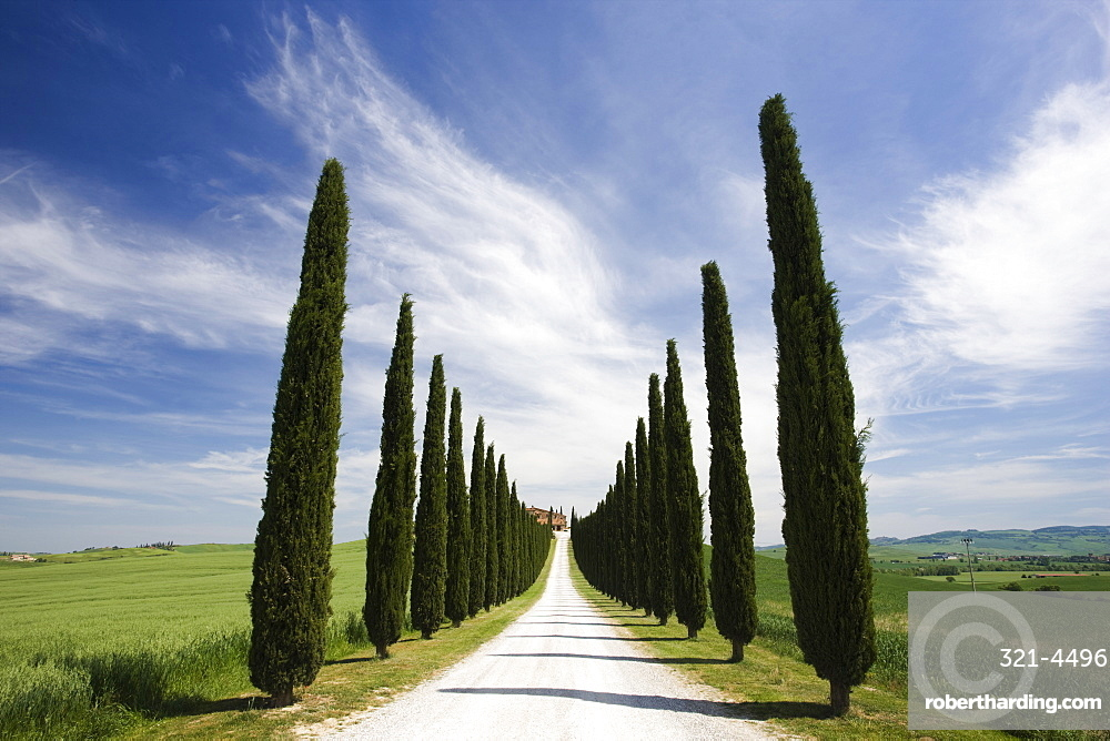 Avenues of cypress trees and driveway leading to farmhouse, near Pienza, Tuscany, Italy, Europe