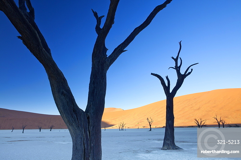 Dead camelthorn trees said to be centuries old in silhouette against towering orange sand dunes bathed in morning light in the dried mud pan at Dead Vlei, Namib Desert, Namib Naukluft Park, Namibia, Africa