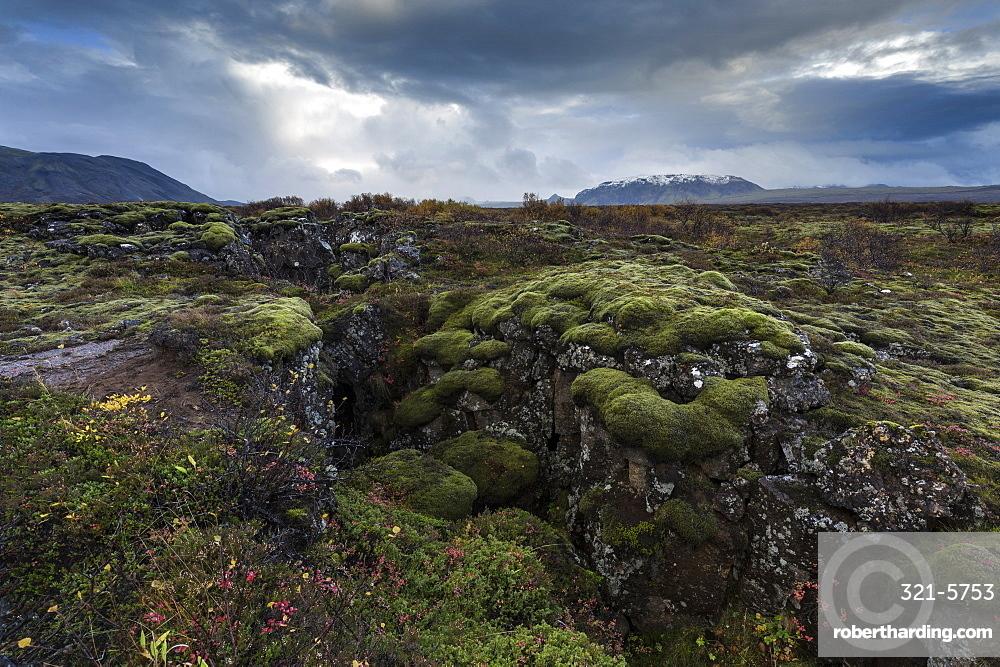 Mossy landscape with fissures, Pingvellir (Thingvellir) National Park, UNESCO World Heritage Site, near Reykjavik, Iceland, Polar Regions