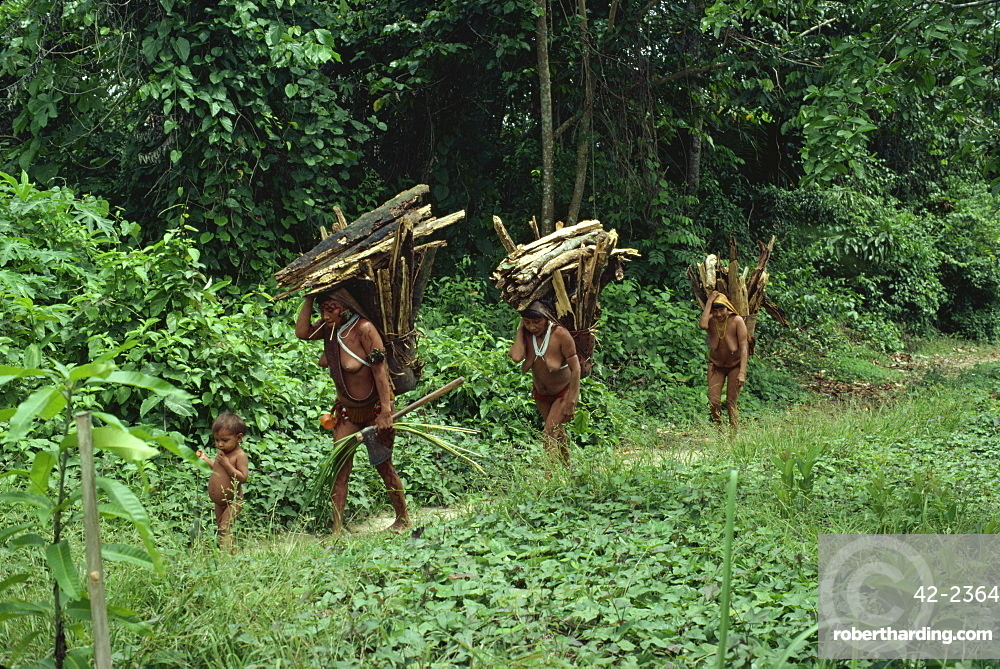 Yanomami indian women collecting wood, Brazil, South America