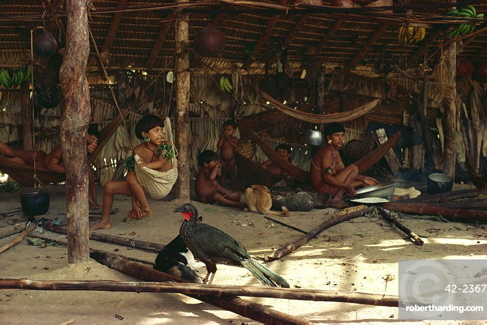 Jacu bird in hut with Yanomami Indians, Brazil, South America