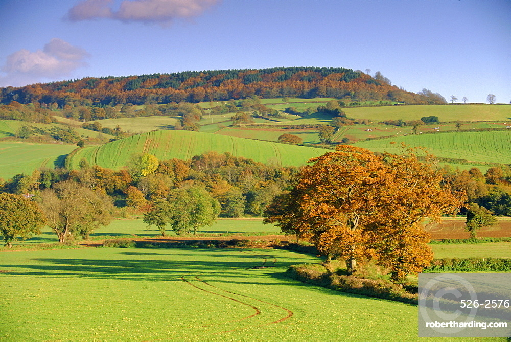Countryside in autumn in the Otter Valley, Devon, England, UK