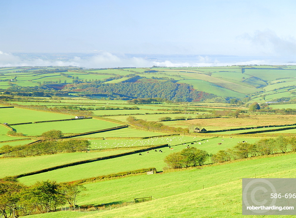 Earling morning mist drifting across fields of sheep on the edge of Exmoor National Park, Exmoor from Shoulsbarrow Common, Challacombe, Exmoor, Devon, England, UK, Europe
