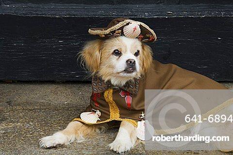 Pilgrim dog, Santiago de Compostela, Galicia, Spain, Europe