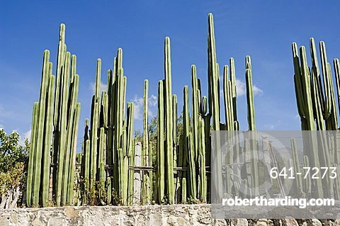 Cactus, Mexico, North America