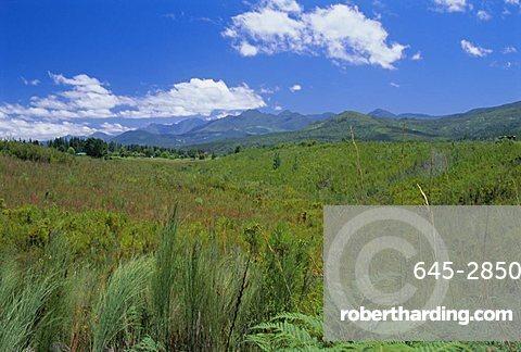 Outeniqua Mountains, Garden Route near Knysna, Cape Province, South Africa, Africa