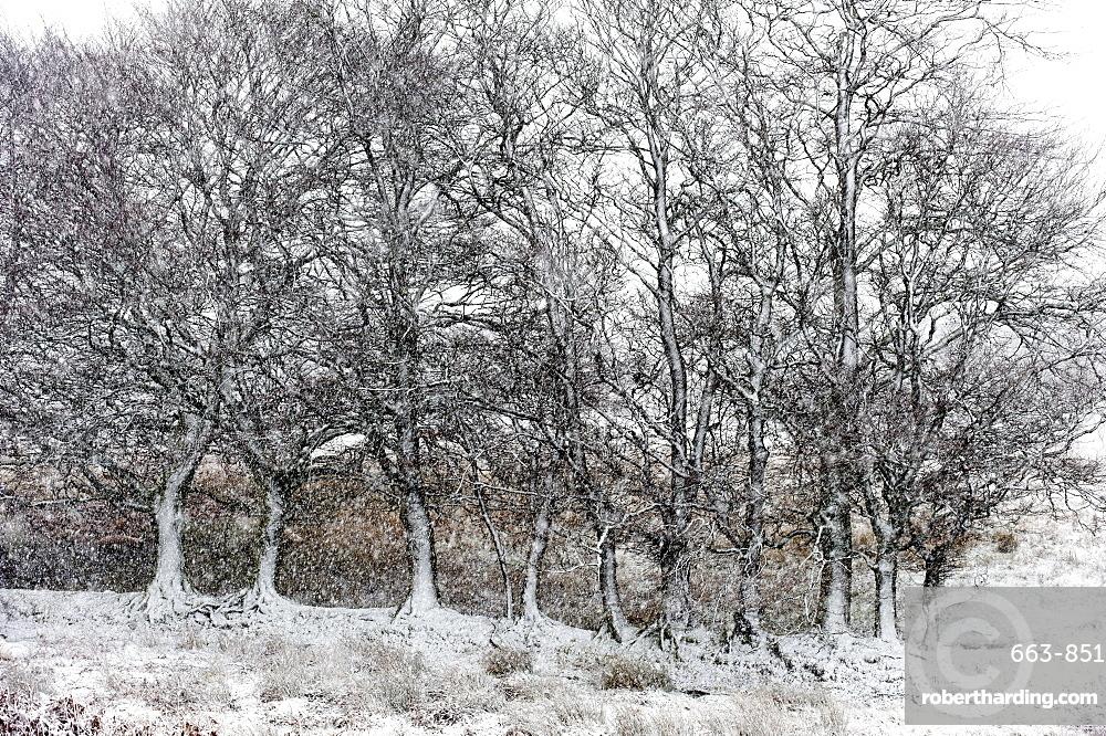 A wintry landscape on the Mynydd Epynt moorland, Powys, Wales, United Kingdom, Europe