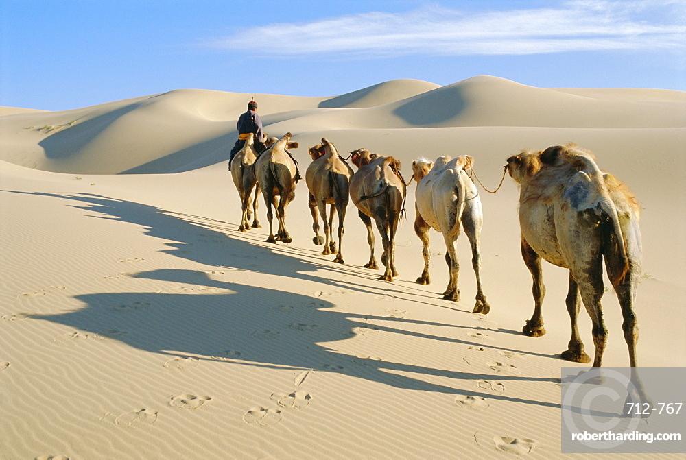 Camel caravan, Omnogov, Gobi Desert, Khongoryn Els Dunes, Mongolia