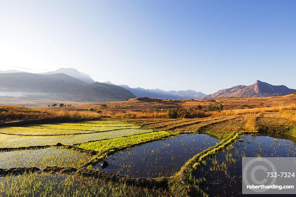 Rice cultivation, Tsaranoro Valley, Ambalavao, central area, Madagascar, Africa