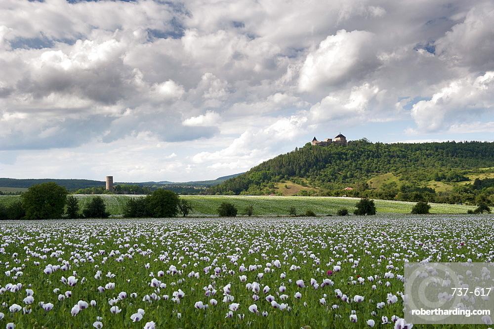 Zebrak and Tocnik castles from across a poppy field, Tocnik, Stredocesko, Czech Republic, Europe