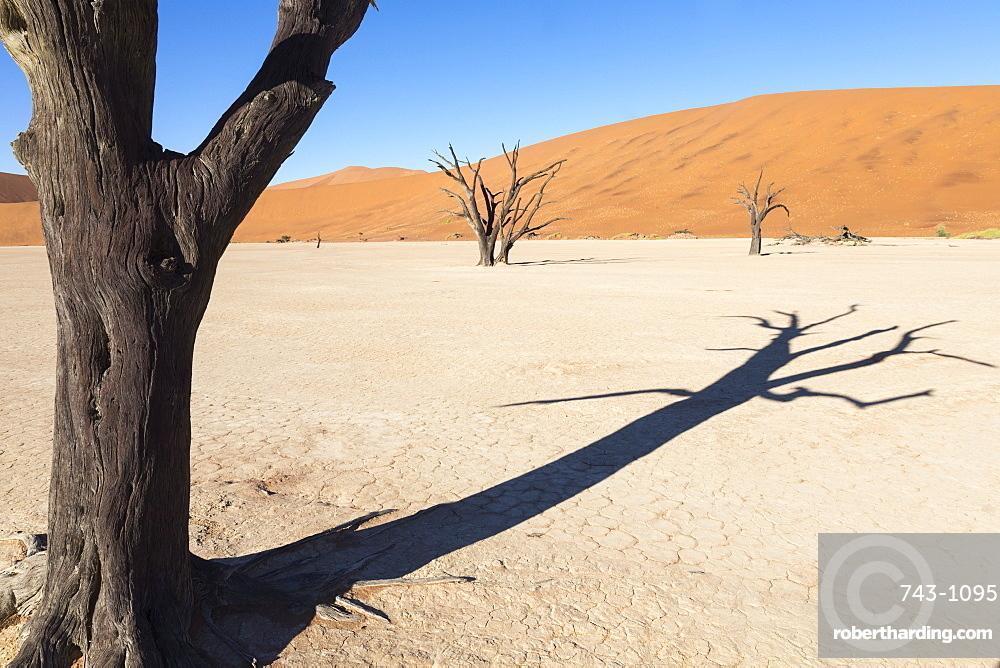 Dead Vlei, Namib Desert, Namibia, Africa