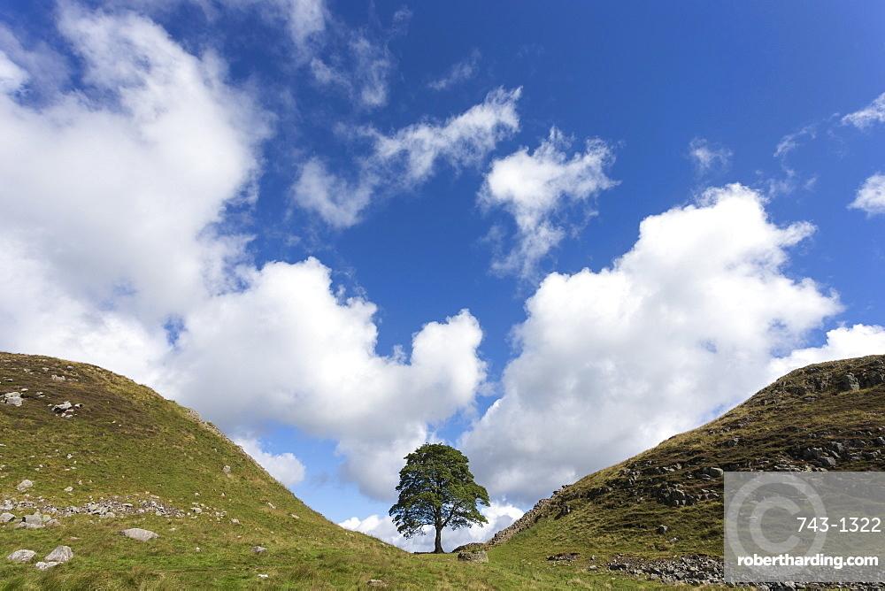 Sycamore gap, Hadrian's Wall, UNESCO World Heritage Site, Northumberland, England, United Kingdom, Europe