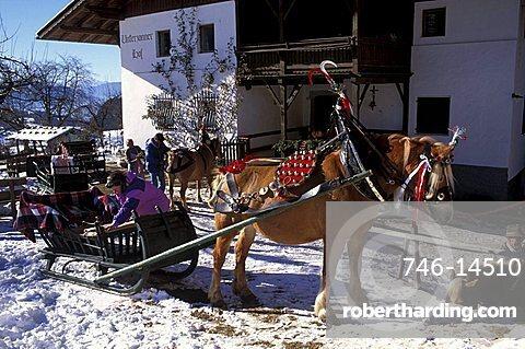 A peasant wedding, Preparation of the horses, Castelrotto, Trentino Alto Adige, Italy.