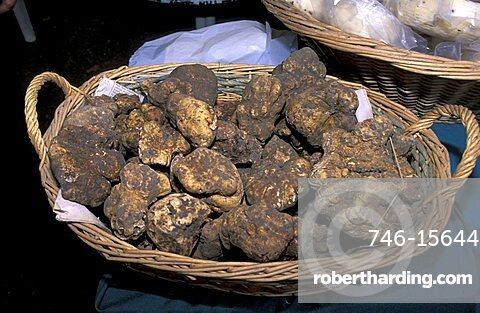 White truffles, Dovadola, Emilia Romagna, Italy