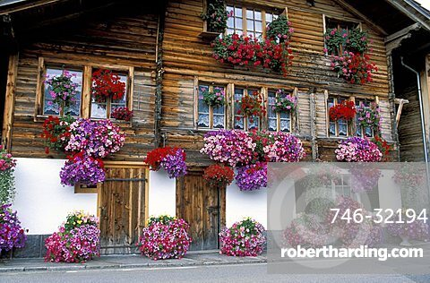 Flower pot with petunias in front of a house