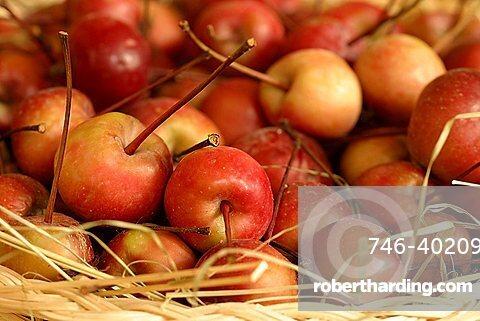 Crab apple, Italy