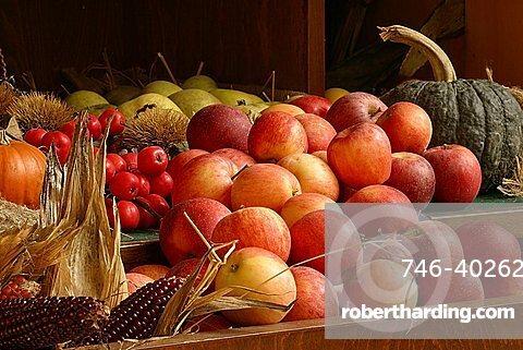 Autumn fruits, Italy