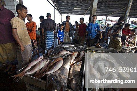 Fish market, Al Hodeidah, Yemen, Middle East