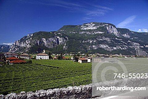 Vines, Mezzocorona, Trentino, Italy