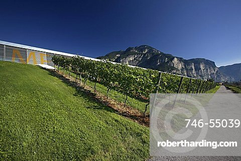 Vineyard, Nosio wineshop, Mezzocorona, Trentino, Italy