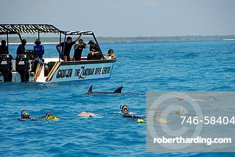 Diving with dolphins, Mnemba Atoll, Zanzibar, United Republic of Tanzania, Africa