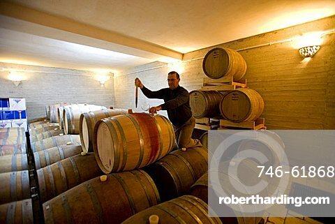 Wine cellar, Cantina Vinicola Botrugno, Brindisi, Puglia, Italy
