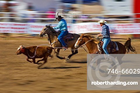 Rodeo, Buckeye, Maricopa County, Arizona, United States of America, North America