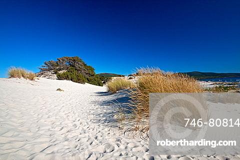 Porto Pino beach, Teulada, Cagliari District, Sardinia, Italy, Europe