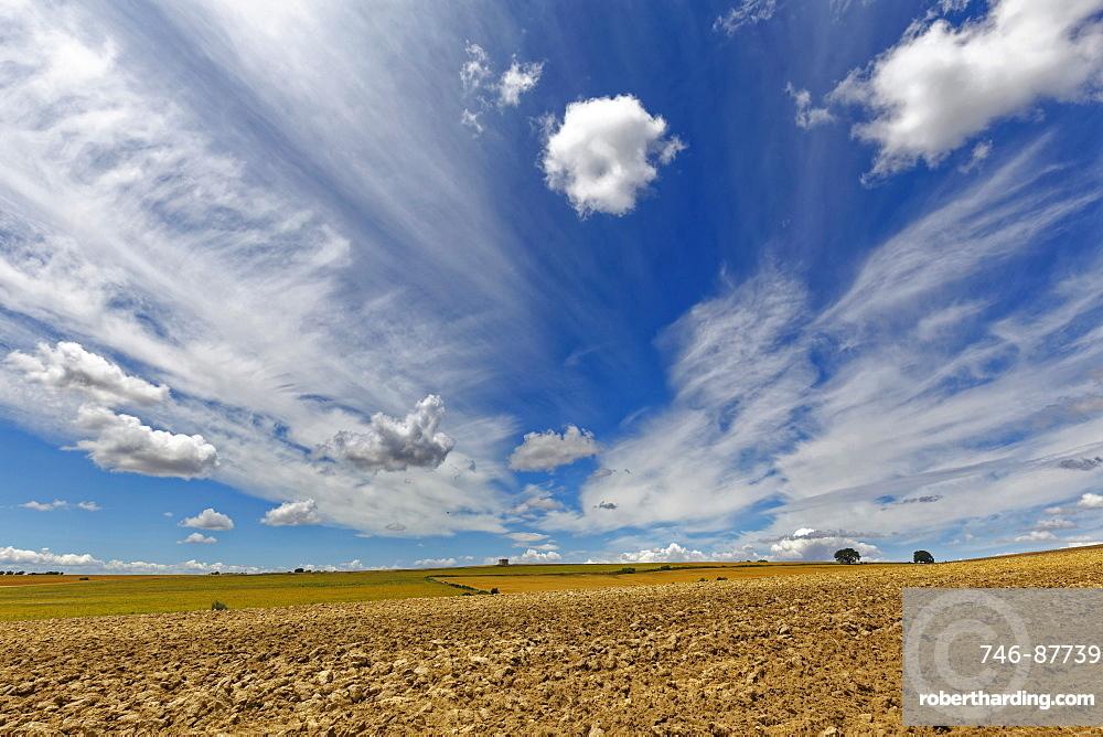 wheat, Murge area, Apulia, Puglia, Italy, Europe