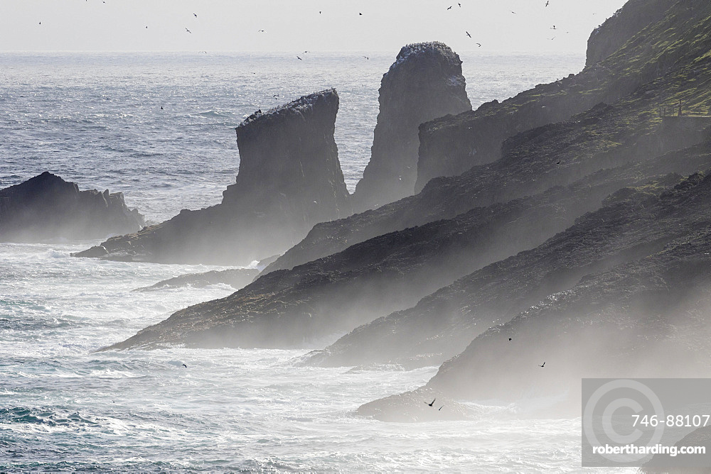 Breakers and spray , the cliffs of Mykinesholmur. The island Mykines, part of the Faroe Islands in the North Atlantic, Denmark, Northern Europe