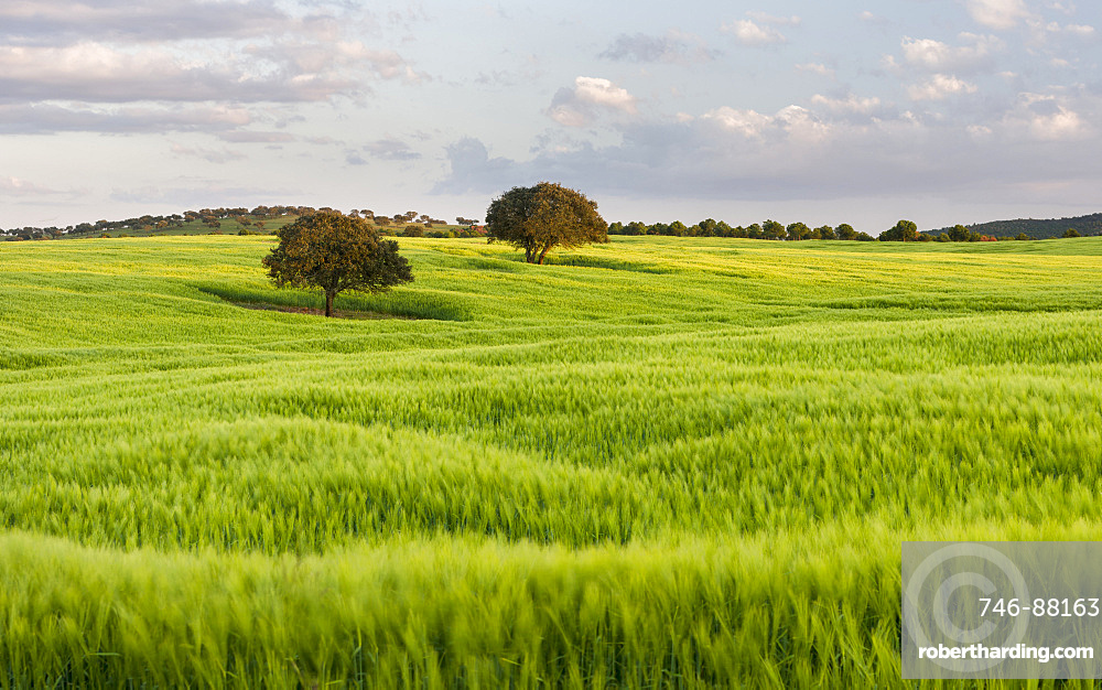 Landscape with fields of grain near Mertola in the nature reserve Parque Natural do Vale do Guadiana in the  Alentejo   Europe, Southern Europe, Portugal, Alentejo