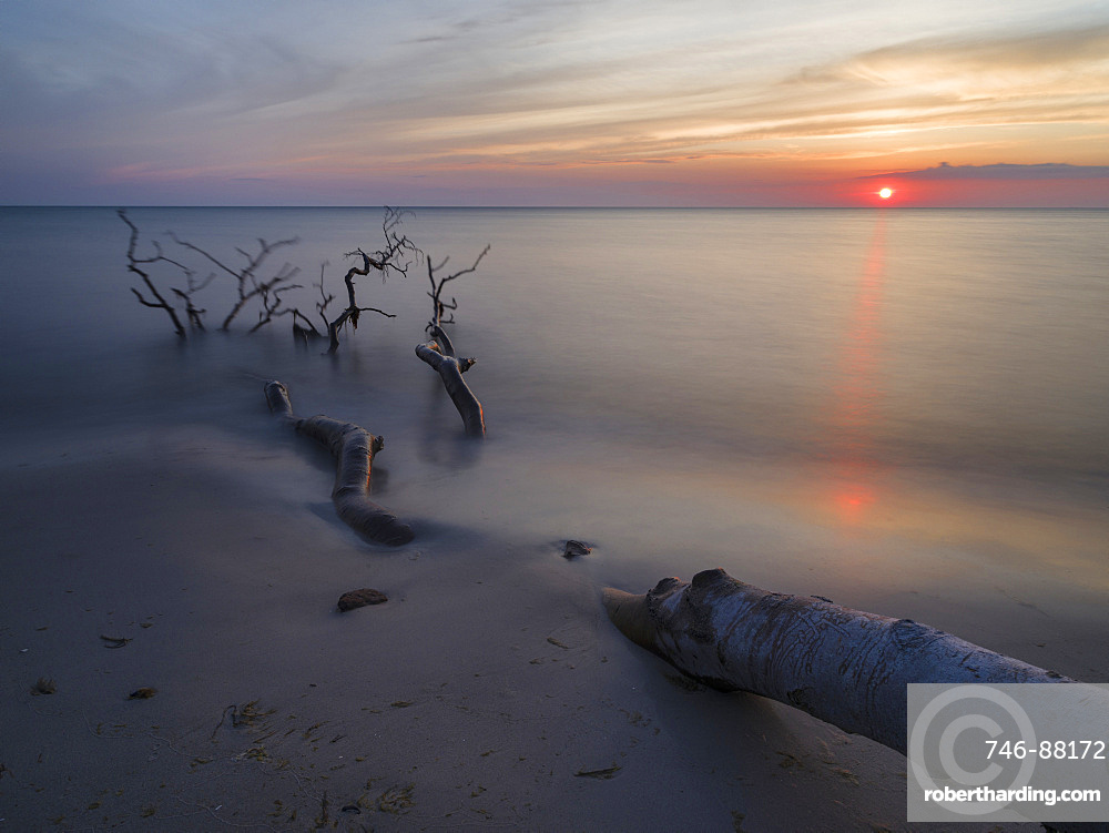 The Weststrand (western beach) on the Darss Peninsula. The beach and the coastal forest  is eroded by storms.  Western Pomerania Lagoon Area NP. Europe, Germany, West-Pomerania, June