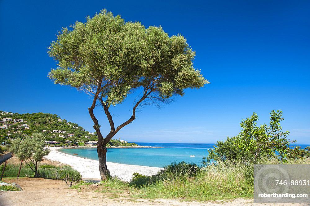 Tarco beach, Corsica, France, Europe