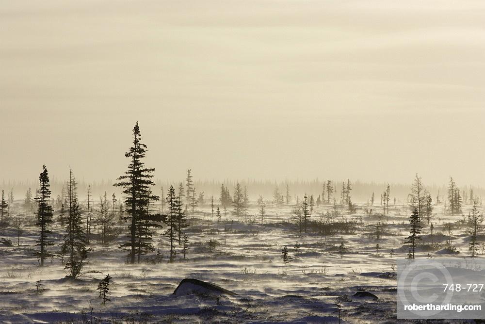 Snow storm, blizzard, Churchill, Hudson Bay, Manitoba, Canada, North America