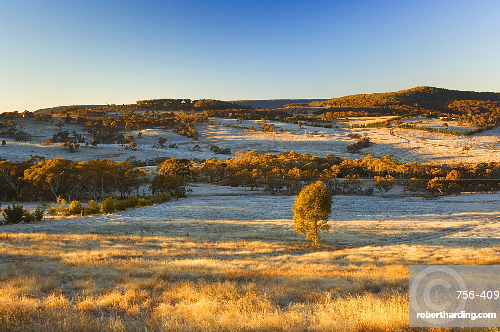 Field and hoar frost, Great Dividing Range, near Goulburn, New South Wales, Australia, Pacific