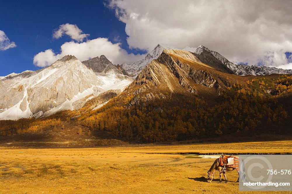Xiaruoduojio mountain and horse, Yading Nature Reserve, Sichuan Province, China, Asia
