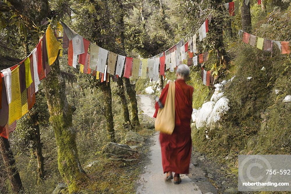 Buddhist monk walking down path, McLeod Ganj, Dharamsala, Himachal Pradesh state, India, Asia