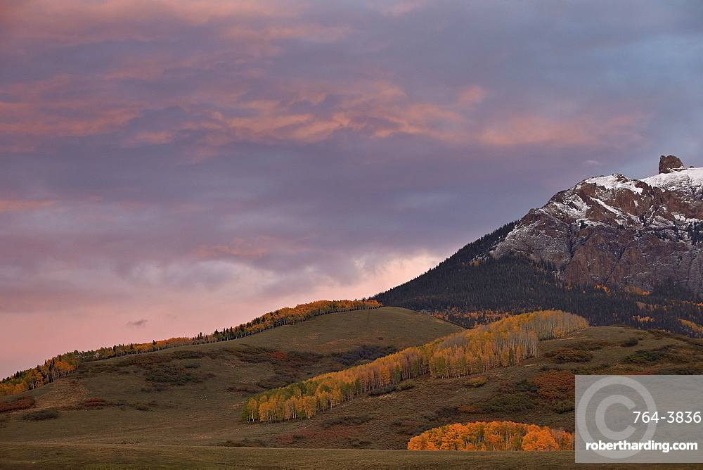 Patches of yellow aspens in the fall under pink clouds, Uncompahgre National Forest, Colorado, United States of America, North America