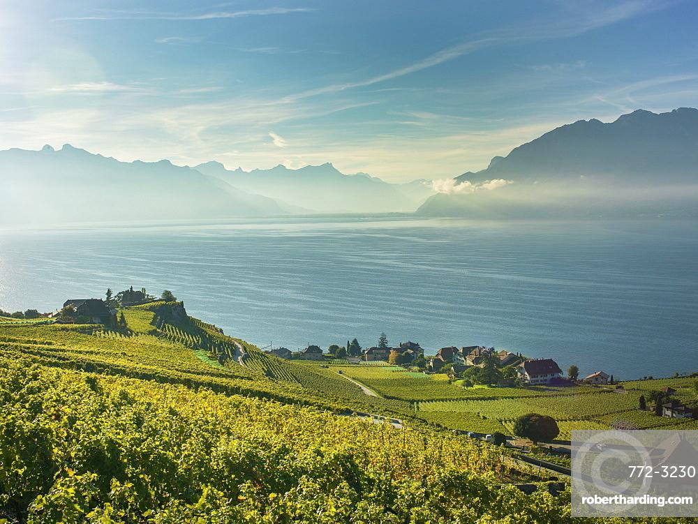Lavaux terraced vineyards on Lake Geneva, Montreux, Canton Vaud, Switzerland, Europe