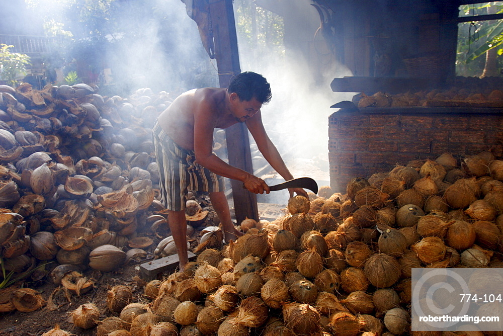 Drying coconuts on Koh Samui, Thailand, Southeast Asia, Asia