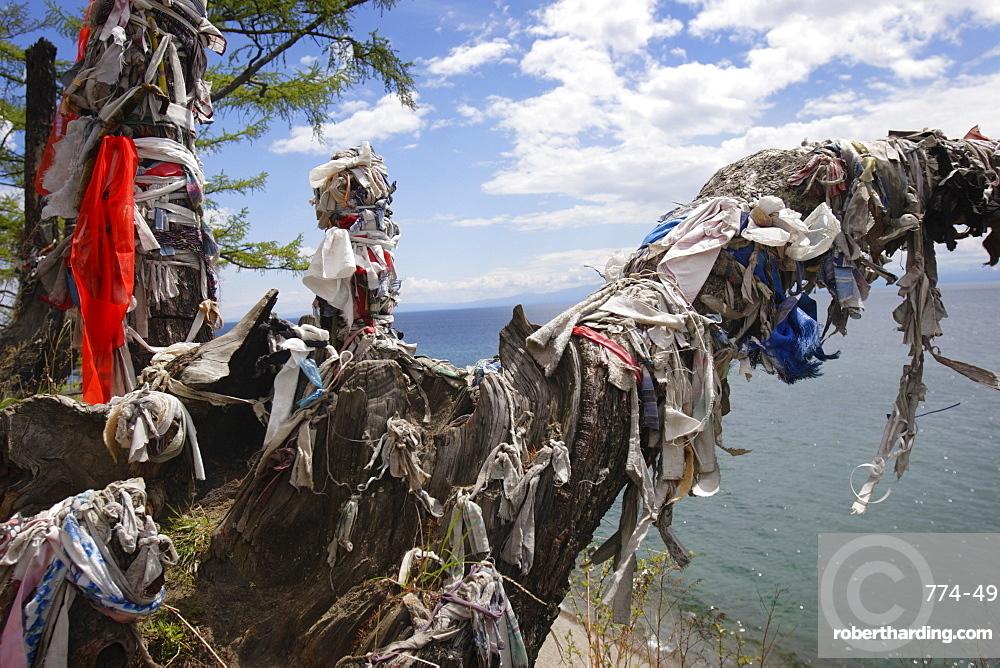 Sacred shamanic tree on Lake Baikal, Siberia, Russia, Europe