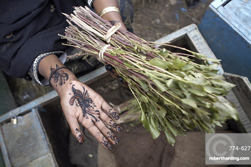 Henna adorn the hands of a woman selling khat (qat) (chat) in the city of Hargeisa, capital of Somaliland, Somalia, Africa