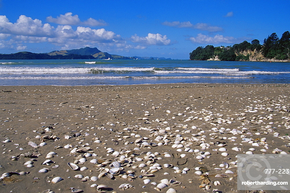 Shells on beach, town of Whitianga, Coromandel area, North Island, New Zealand, Pacific