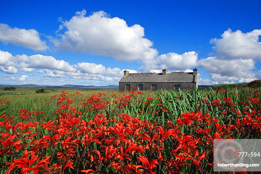 Montbretia flowers and old cottage, Blacksod Bay, County Mayo, Connacht, Republic of Ireland, Europe