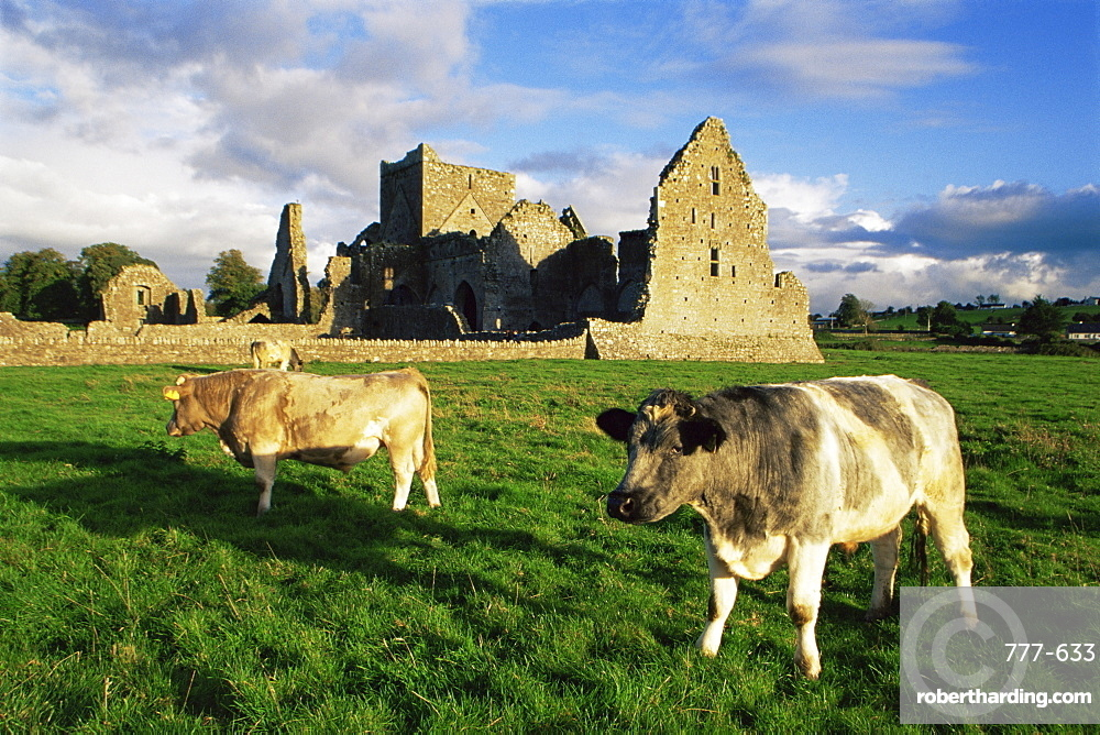 Hore Abbey, Cashel, County Tipperary, Munster, Republic of Ireland, Europe