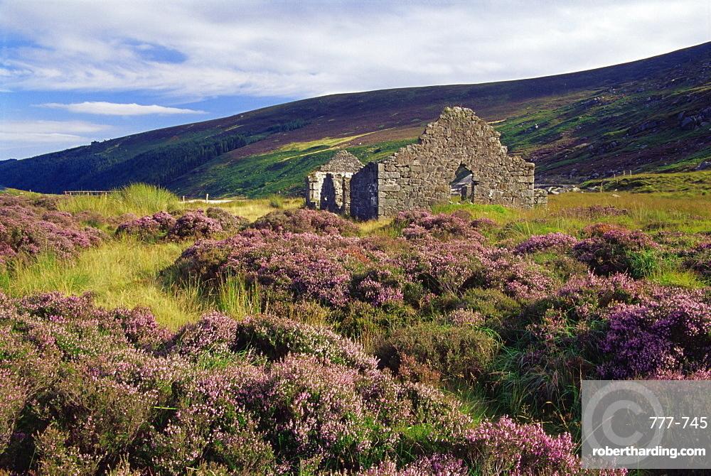 Ruin near Wicklow Gap, Wicklow Mountains, County Wicklow, Leinster, Republic of Ireland, Europe
