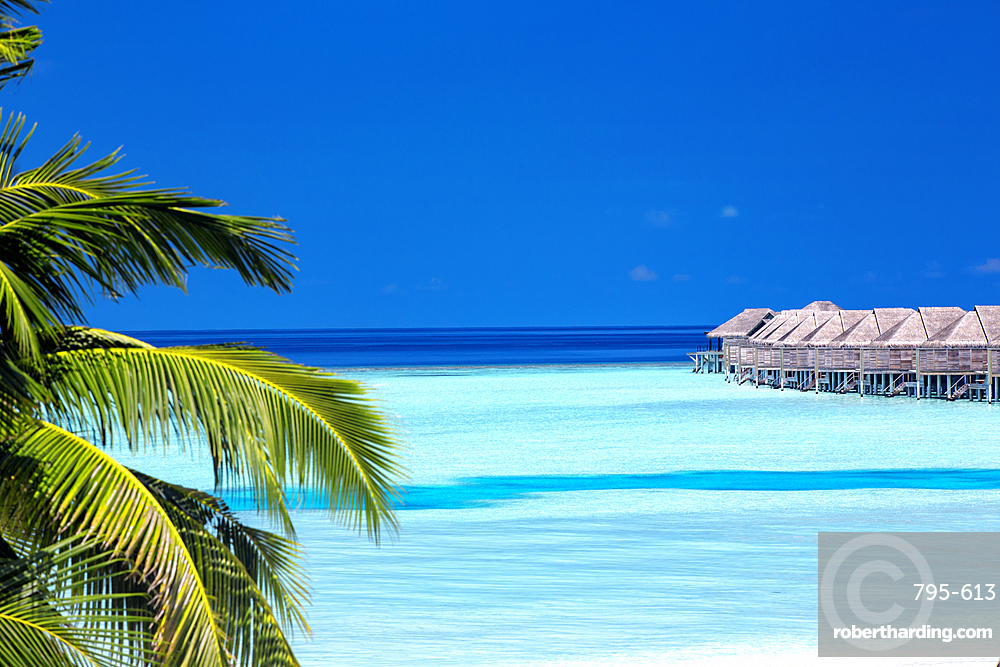 Palm tree and lagoon, Resort in Maldives, Indian Ocean, Asia